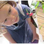 Raising and Observing Butterflies with Kids